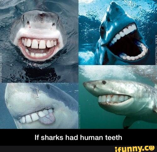 Human Teeth Shark