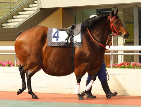 race-horse-r