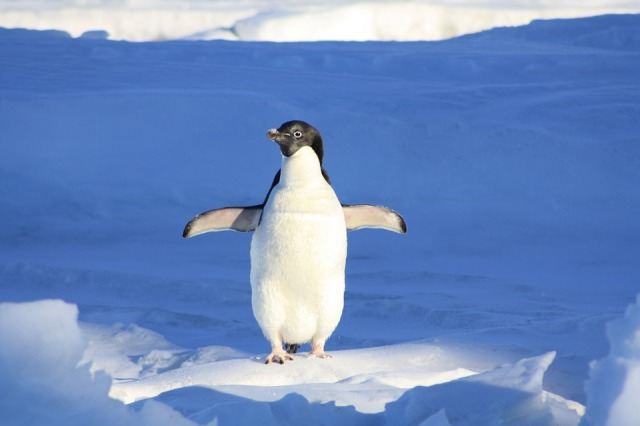 Funny Water Penguin Animal Blue
