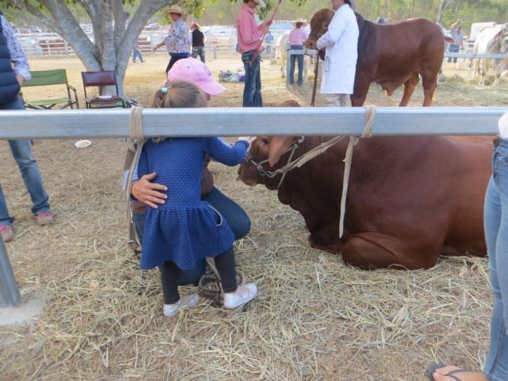 Patting the Bull